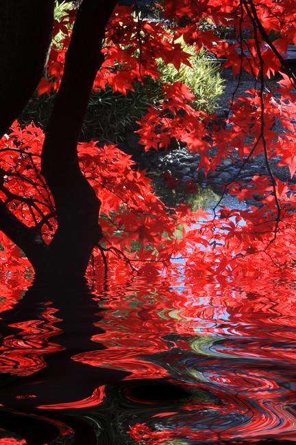 CA_bigstock-Japanese-1452753OPT