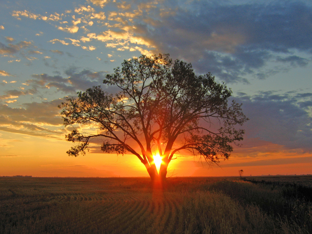 CA_bigstock-Sunrise-Shines-Through-Tree-1504012OPT